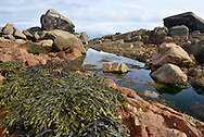 Classic coastal rock pool, Old Town Bay, St Mary's, Isles of Scilly, UK