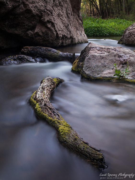 Aravaipa creek flows like silk past a fallen, moss-covered log.