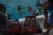 Members of the coral relocation operation prepare baskets of coral to give to divers in the water, who then place the coral in a new area, during a coral relocation operation off of Curieuse, Seychelles on February 20, 2018. The coral relocation operation is an effort to reduce the effects of coral bleaching caused by the rise in sea temperatures which deeply affected shallow water reefs in parts of the Seychelles.<br /> <br /> The government of Seychelles has created 81,000 square miles of Marine Protected Areas as part of a conservation debt swap deal in an effort to shield marine ecosystems from unsustainable development and climate change while safeguarding its economy.