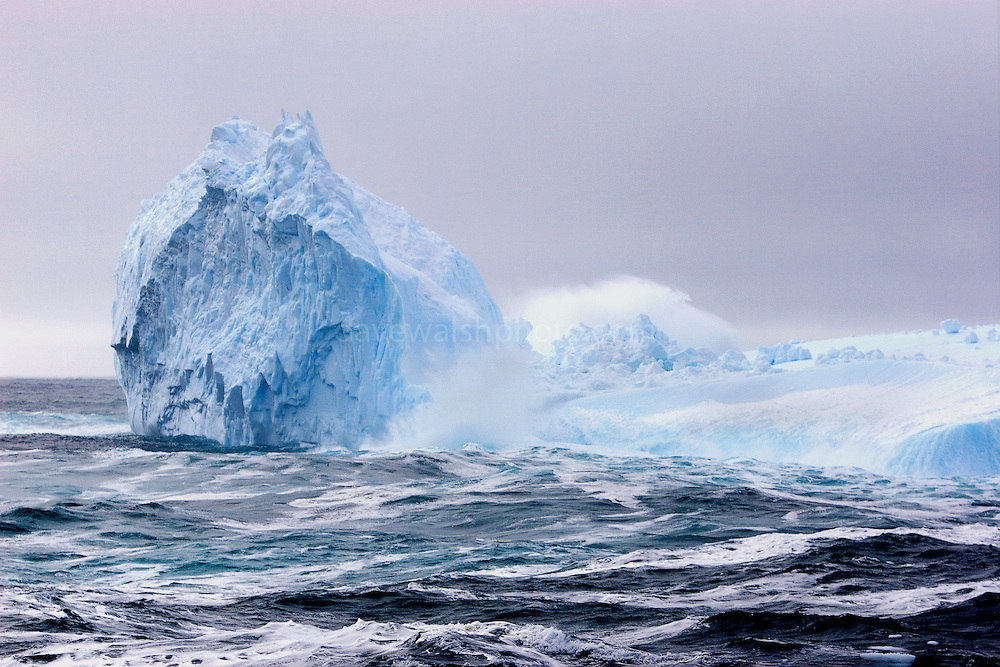 Southern Ocean Whaling 2007