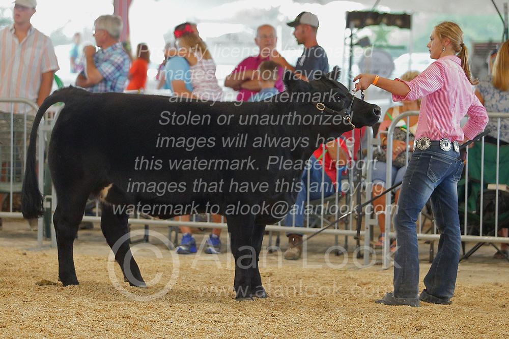 03 August 2017:  Kellie Jones shows her cow at 2017 McLean County Fair<br /> <br /> #alphoto513