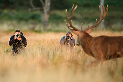 © Licensed to London News Pictures. 09/10/2016. London, UK. two photographer photograph a deer stag, walking  at sunrise on a bright Autumnal morning in Richmond Park in London. Photo credit: Ben Cawthra/LNP