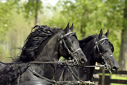 Horse<br /> © Dirk Caremans