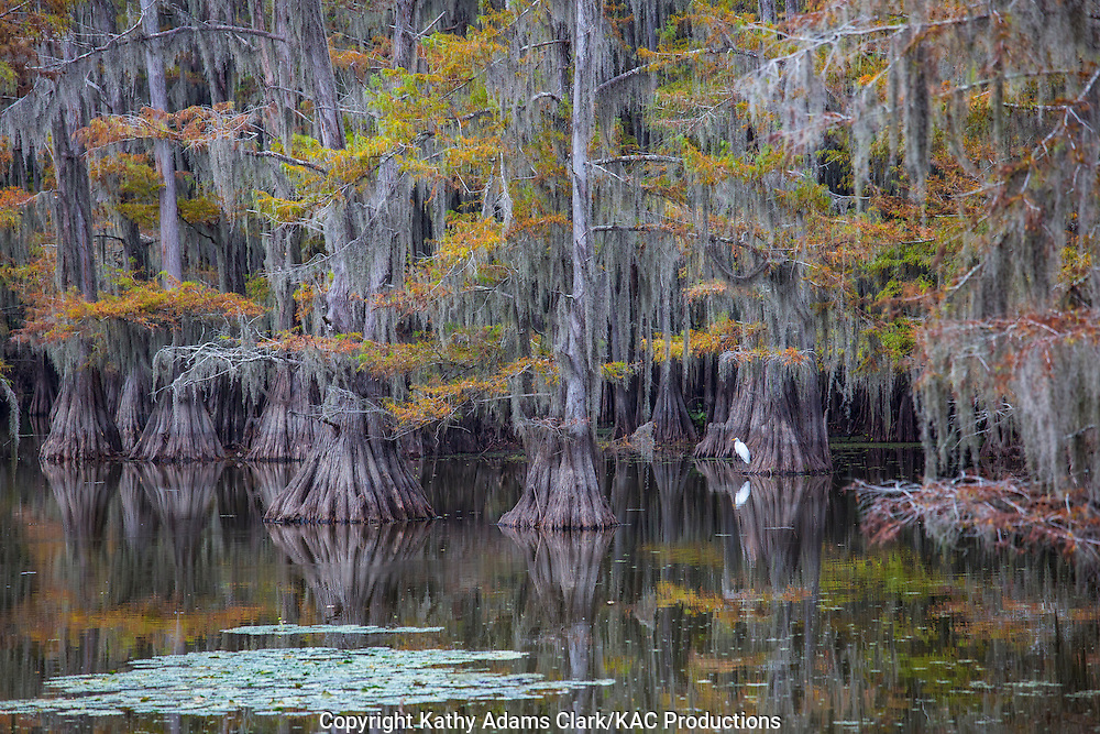 Caddo Lake State Park is a great place to see stands of cypress trees on Caddo Lake.  The park offers hiking, boating, camping, and birdwatching.