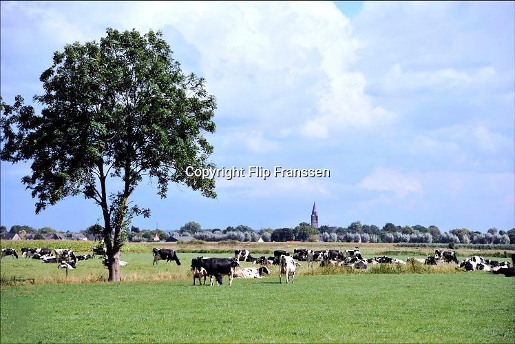 Nederland, Millingen aan de Rijn, 12-9-2015Zwartbont koeien liggen te herkauwen in een weiland in de Ooijpolder. Kerktoren in de achtergrond.Foto: Flip Franssen/Hollandse Hoogte