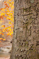 Fall tree trunk with graffiti carved into it .