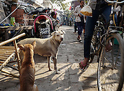 Two dogs roam a narrow street in Mandalay, Myanmar.