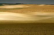 Arable Prairies