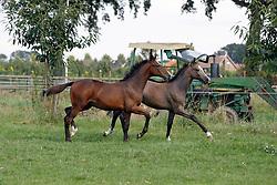 Van Montfort Sef<br /> Echt 2007<br /> Photo © Dirk Caremans