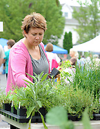 Audra DelConte of Quakertown, Pennsylvania looks at some plant material from Brumbaugh Farm at the newly located newly located Perkasie Farmers Market Saturday June 20, 2015 in Perkasie, Pennsylvania.The farmers market relocated because of construction at the old site.  (Photo by William Thomas Cain)