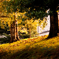 Trees, autumn, Cork, brown, restful, peaceful, fall
