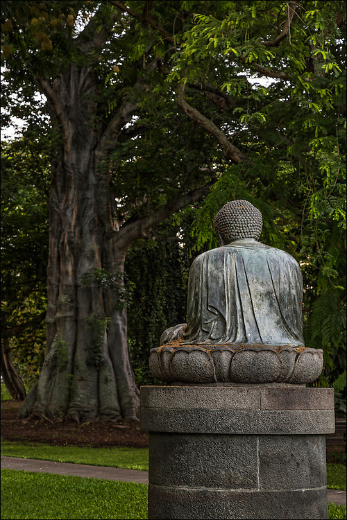 Statue of Buddha watches over Baobab tree In Foster Botanical Garden, which a clone from original Bodhi tree which Buddha himself meditated under when he was enlightened. Note:  Mary Foster was a Buddhist. ©PF Bentley