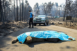 June 18, 2017 - Figueira dos Vinhos, Portugal -  Some of the fire victims lay covered in the road at Pedrogao Grande municipality under military guard (GNR) near the village of Nodeirinho. At least 62 people were killed in the fire that hit Pedrógão Grande and two other municipalities in the district of Leiria since Saturday, according to the Secretary of State for Internal Affairs Portugal. (Credit Image: © Atlantico Press via ZUMA Wire)