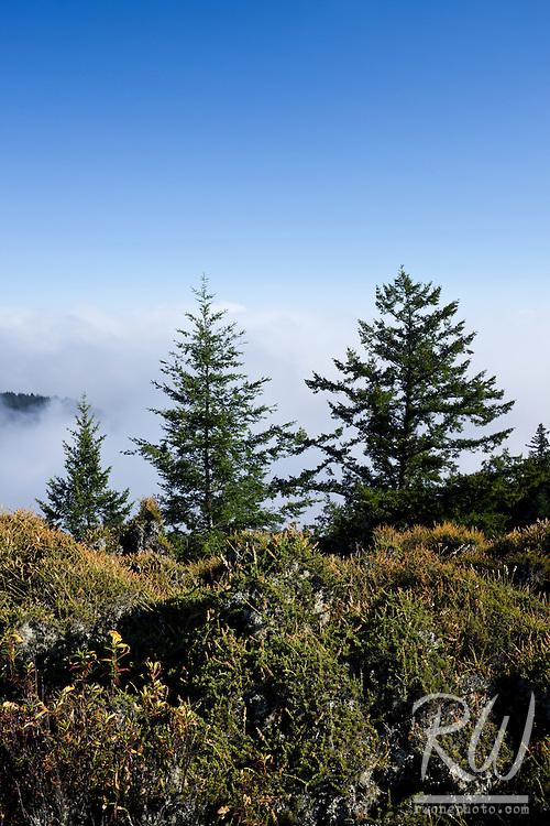 Summer Fog Rolling into Bolinas Ridge, Mount Tamalpais State Park, California