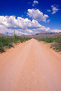 Cumulus clouds over dirt road in the Puerto Blanco Mountains, Organ Pipe Cactus National Monument, Arizona