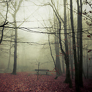 Empty bench in a park at a foggy november morning.