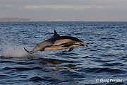 long-beaked common dolphin, Delphinus capensis (formerly lumped with common dolphin, Delphinus delphis ) porpoising out of water, off San Diego, California, U.S.A. ( eastern Pacific Ocean ) #1 in sequence of 2