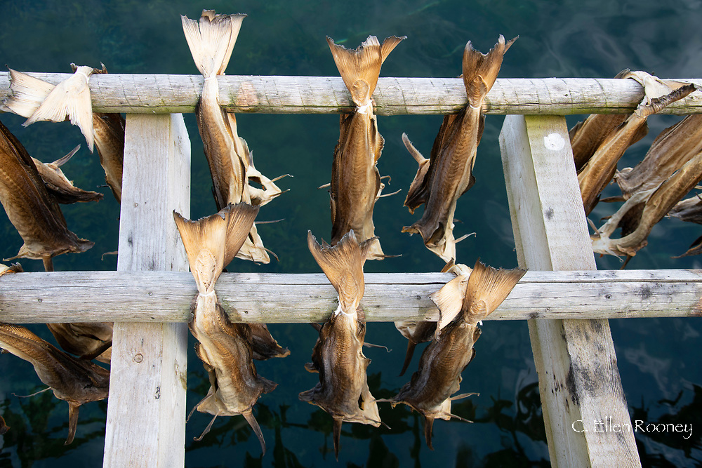 Cod drying on a wood rack over Reine Fjord in the Lofoten Islands, Norway