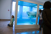 Damien Hirst shark  art piece as funny toy for tourists while on display in the Metropolitan Museum of Art NYC 2008