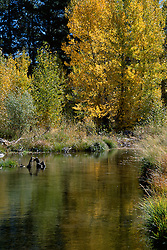 &quot;Little Truckee River in Autumn&quot;- Photographed at the Little Truckee River, which runs along side part of the Donner National Scenic Byway (or Hwy 89).<br />