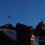 London mornings