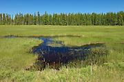 Wetland in boreal forest<br /> near Ignace<br /> Ontario<br /> Canada