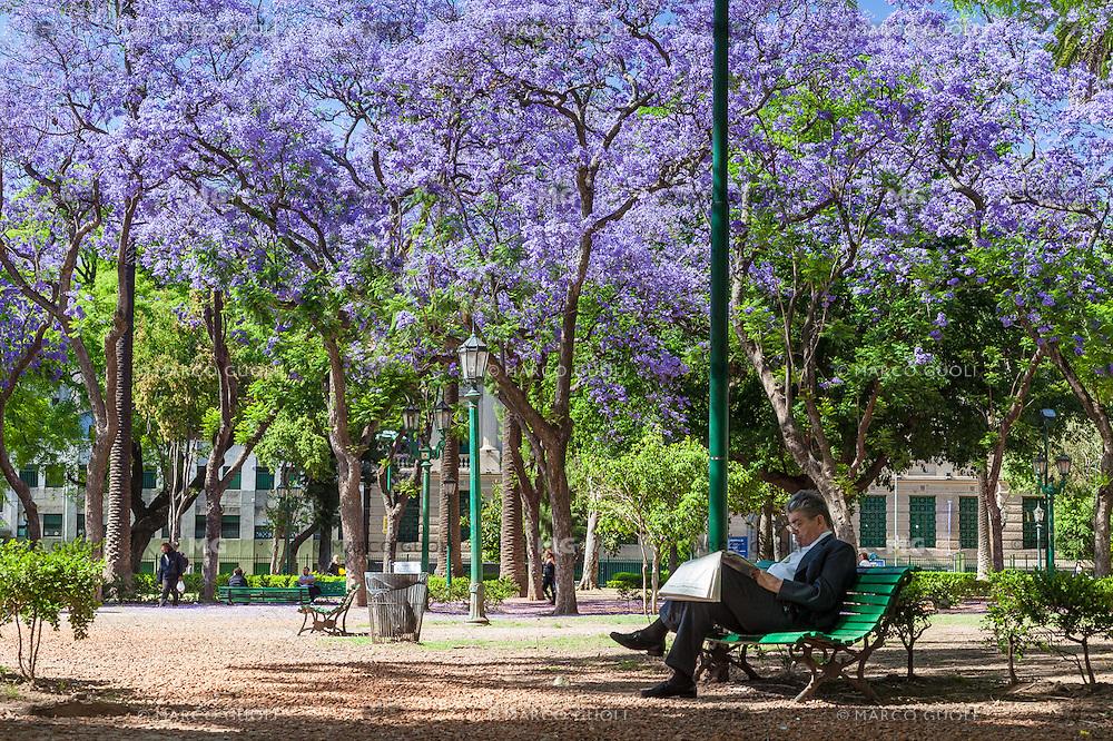 PLAZA RODRIGUEZ PENA Y ARBOLES DE JACARANDA FLORECIDOS, CIUDAD AUTONOMA DE BUENOS AIRES, ARGENTINA (PHOTO © MARCO GUOLI - ALL RIGHTS RESERVED)