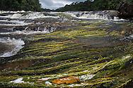 Aquatic plants above the waterfall. Potaro River, Guyana.