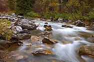 Fall colors, greys river, Alpine, Wyoming