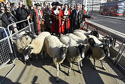 September 30, 2018 - London, UK - LONDON, UK. Alan Titchmarsh, TV presenter, leads the annual Sheep Drive of Worshipful Company of Woolmen across London Bridge ahead of being made a Freeman of the City of London.  The event raises funds for the Lord Mayor's Appeal and the Woolmen's Charitable Trust. (Credit Image: © Stephen Chung/London News Pictures via ZUMA Wire)