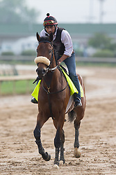Derby 142 hopeful Suddenbreakingnews with Ramiro Gorostieta up were on the track for training, Sunday, May 01, 2016 at Churchill Downs in Louisville.