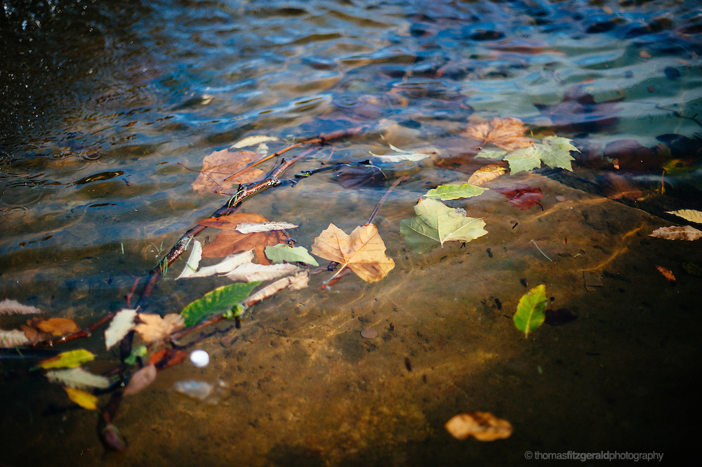 Autumn, Ireland: Coloured fallen leaves floating in Water. Shallow depth of field
