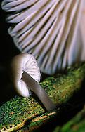 Alberto Carrera, Narural Colors Exhibition, Mushroom, Guadarrama National Park, Segovia, Castilla y León, Spain, Europe.