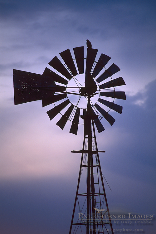 Hawk on top of rural windmill at sunset, Merced Grasslands, Central Valley, California