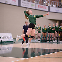 2nd year setter Kirstin Greve (17) of the Regina Cougars in action during Women's Volleyball home game on February 3 at Centre for Kinesiology, Health and Sport. Credit: Arthur Ward/Arthur Images