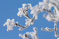 Feb 12, 2014; Diamond Dust, frozen fog, on tree branches in Martin, OH, USA;  Mandatory Credit: Rick Osentoski