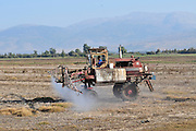 Israel, Hula Valley, Tractor spreads fertilizer before ploughing the field