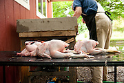 This small Oregon farms ethically and humanly raises and processes chickens that have lived their life on pasture.