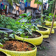CAPTION: Alongside the materials recovery facility is an example of an urban garden, which Art, the Barangay Captain, promotes to local households for replication in their back gardens. In addition to increasing the soil's absorption capacity, an urban garden can reduce a household's expenditure on food and increase its members' food security. The project is currently in a pilot phase, but the Climate Core Team has recognised the initiative as a 'best practice' for increasing urban climate change resilience and it has also been identified as a potential initiative for replication across other barangays. LOCATION: Materials Recovery Facility and Urban Garden, East Rembo Barangay, Makati City, Metro Manila, Philippines. INDIVIDUAL(S) PHOTOGRAPHED: N/A.