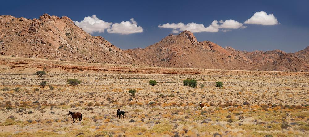 Wild Horses near Aus, Karas Region, Namibia.