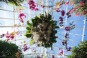 The New York Botanical Garden Orchid Show, 2015