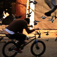 Bicyclist pulls tricks amidst flying pigeons in San Francisco, CA. Copyright 2007 Reid McNally.