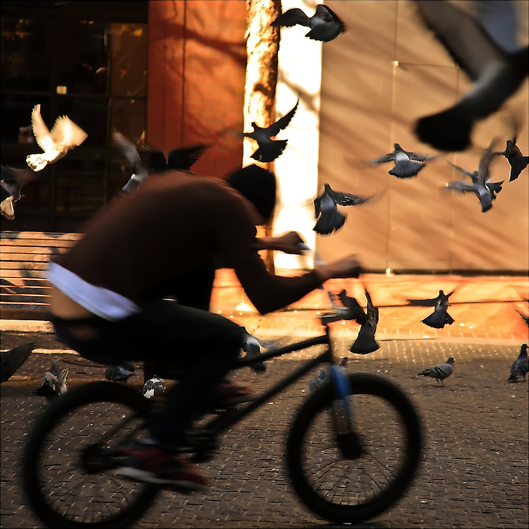 Bicyclist pulls tricks amidst flying pigeons in San Francisco, CA. Copyright 2007 Reid McNally.
