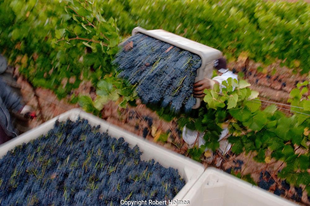 Gowan Creek vineyard, Anderson Valley, Mendocino