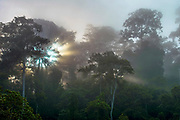 Sunrize in the foggy rainforest of Tabin, Sabah, Borneo.