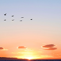 A flock of pelicans and a Ventura California sunset on November 16, 2007.