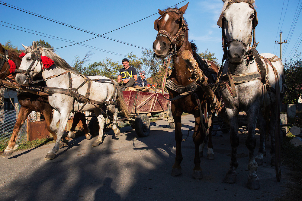 Horse carriages in the village of Isverna. Mehedinti Plateau Geopark, Geoparcul Platoul Mehedinți, Isverna, Romania.