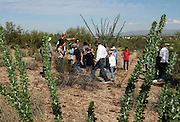 Students from Drachman Elementary School and staff of the Desert Laboratory at Tumamoc Hill conduct a cactus count at the University of Arizona, Tucson, Arizona, USA.