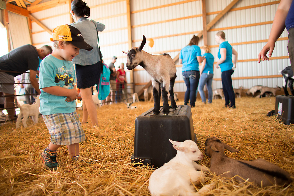 Tristan Keenan (3), checks out a goat during the Breakfast on the Farm event near Shedden, Ontario, Saturday, June 24, 2017.<br /> Farmers Forum/ Geoff Robins