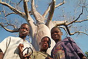 Africa. Zambia. luangwa river bridge camp..Boys under the boabab tree..CD0009